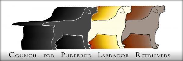 Silver labrador history We sell Silver Labradors and Charcoal Labradors